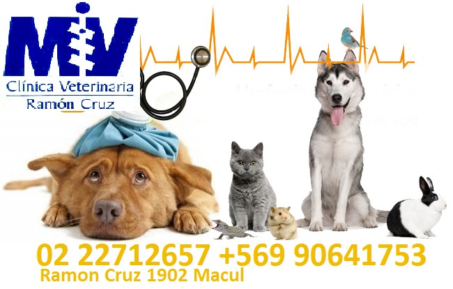 VETERINARIA RAMON CRUZ Macul